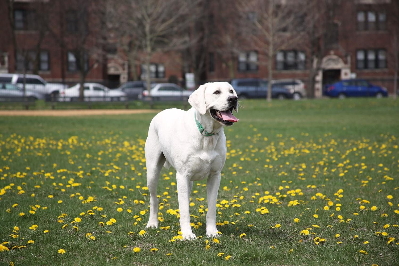 jefferson-park-dog-newcastle